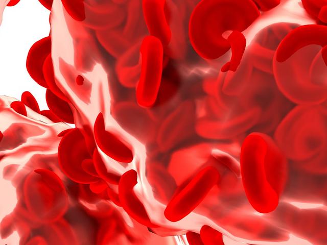 赤血球の画像
