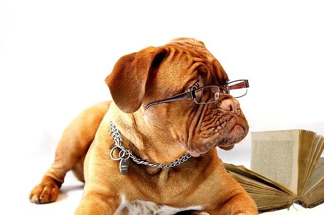 メガネをかけたブルドッグの画像